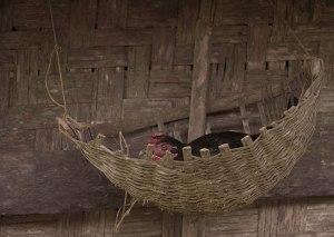 ayam piaraan di samping lumbung