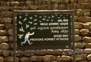 hornet-sigiriya-srilanka