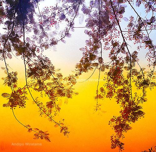 pohon di air terjun kuang si luang prabang laos