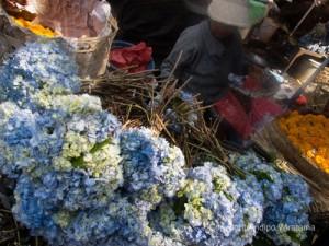 bunga seribu di pasar