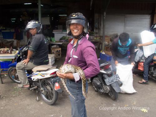 ular-pasar-badung-denpasar