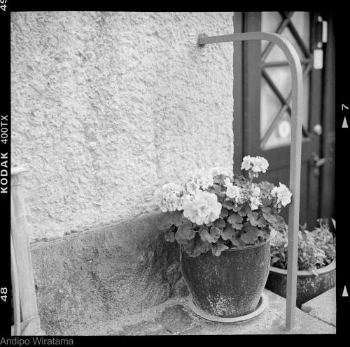copenhagen-flowers